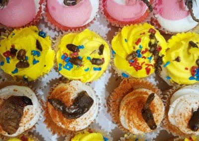 cup cakes-edible insects